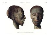 A Vol. II — Thèbes. Hypogées — Pl. 49 - Profil et face d'une tête de momie d'homme