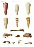 A Vol. II — Thèbes. Hypogées — Pl. 52 - 1...6. Momies d'ibis 7...13. Fragmens de momies de chacal qui ont été dorées 14. Fragmens de l'enveloppe des doigts d'une momie