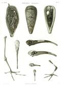 A Vol. II — Thèbes. Hypogées — Pl. 53 - Momies d'oiseaux