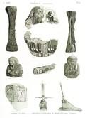 A Vol. II — Thèbes. Hypogées — Pl. 57 - 1.2. Tenons en bois 3...9. Fragmens d'enveloppe de momie et autres antiques