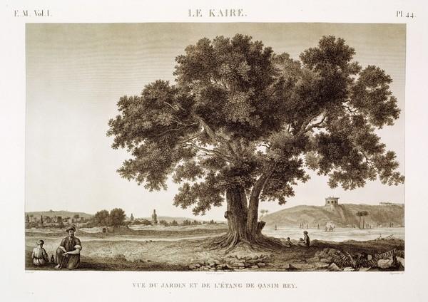 EM Vol. I — Le Kaire — Pl. 44