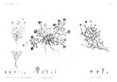 HN Botanique — Pl. 47 - 1. Balsamita tridentata 2. Filago mareotica 3. Anthemis indurata 4. Cotula cinerea