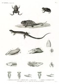 HN Reptiles — Pl. 4