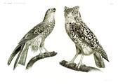 HN Zoologie Oiseaux — Pl 3