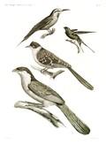 HN Zoologie Oiseaux — Pl 4