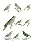 HN Zoologie Oiseaux — Pl 5