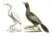HN Zoologie Oiseaux — Pl 8