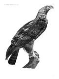 HN Zoologie Oiseaux — Pl 12