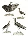 HN Zoologie Oiseaux — Pl 14