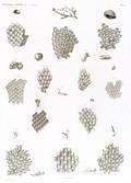 HN Zoologie. Polypes — Pl. 10 - Flustres