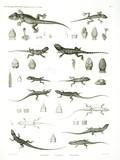HN Zoologie Reptiles (supplpment) — Pl. 1
